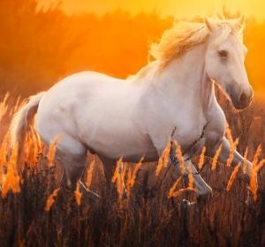 Tierarztsoftware Pferdepraxis inBehandlung